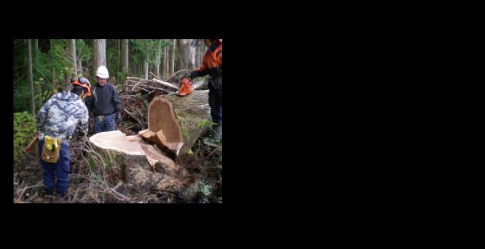 木が切り倒される風景は圧巻です